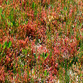 Plants on a sphagnum bed.