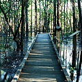 St. Tammany Parish, a forest boardwalk during a transient flood.