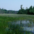 Burlington County, open lake habitat in the Pine Barrens.