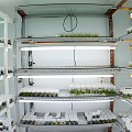 A home tissue culture lab supplying a successful carnivorous plant nursery.